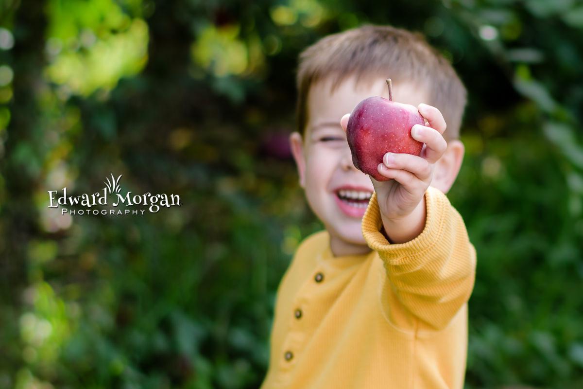 Apple-farm-photos-1