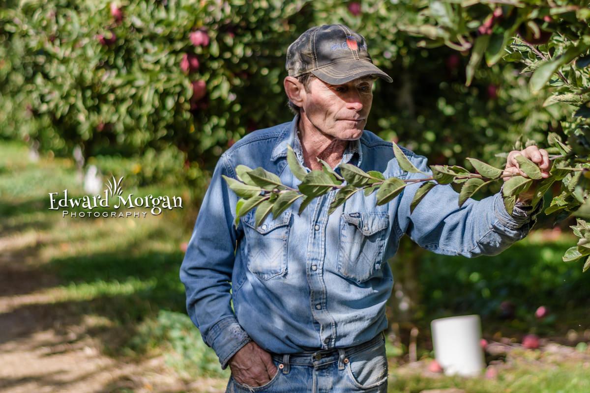 Apple-farm-photos-40