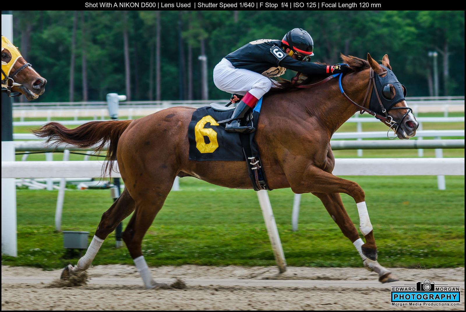 Horse-race-1546-X3